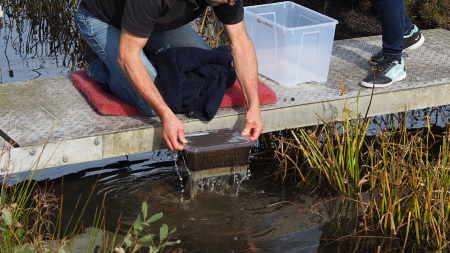 Mikroplastik Kirlilik Solucanları ve Diğer Tatlı Su Canlılarını Olumsuz Etkiliyor